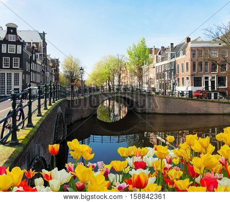 Houses and bridge over canal with tulips, Amsterdam, Netherlands