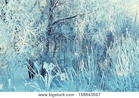 Winter landscape of frosty winter tree branches in winter forest