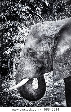 Black and White version of an elephant's head showing the deep creases and marks