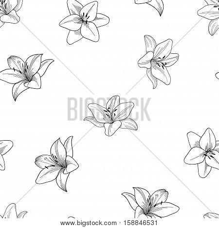 Black and white seamless vector pattern with lily.  Floral black and white background with lily.