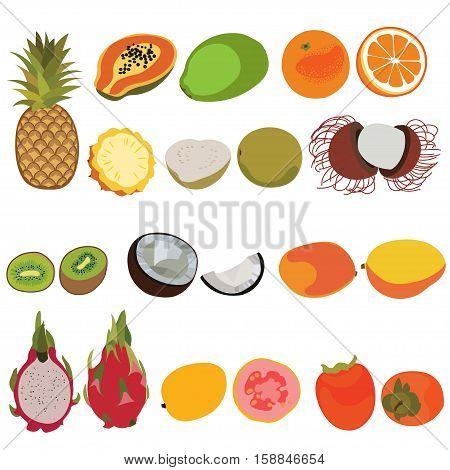 Tropic fruit isolated vector set illustration. Flat style vector set of fruits. Pineapple, papaya, orange, guava, rambutan, kiwi, coconut, mango, dragon fruit, persimmon fruits vector set.