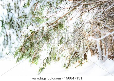 White Winter in New Brunswick province, Canada