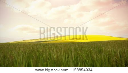 Scenic view of beautiful wheat field on sunny day