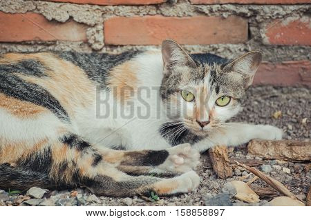 Beautiful White and orange cat on the street