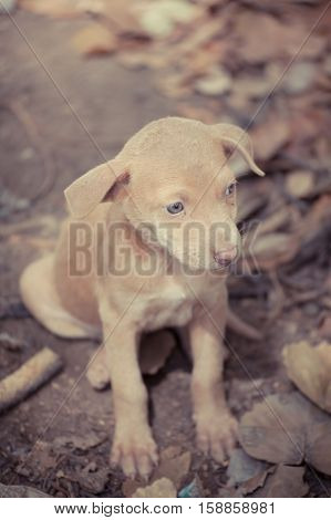 Stray dogs Sad puppy on the street