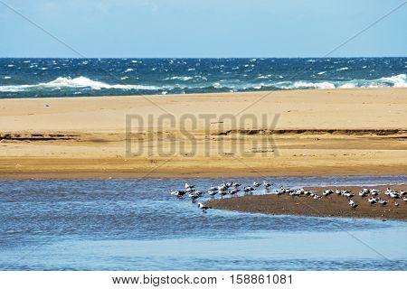 Many Resting Seagulls On  Sandy Lagoon Island