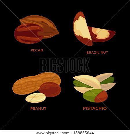 Nut set. Ripe nuts and seeds vector illustration. Various nuts. Highly detailed nut icons nutmeg, almond peanut, pestachio, cashew, brazil nut, pecan. Vector Illustration.