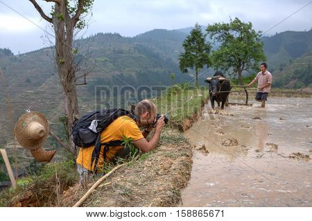 Zhaoxing Dong Village Guizhou Province China - April 9 2010: A tourist photographs the farmer who plowed the soil in the rice fields using buffalo.