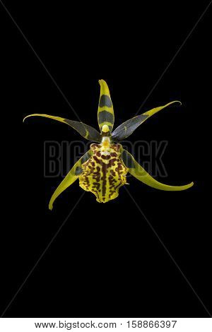 The image Orchid isolated on black background