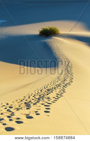 Beautiful sand dunes in desert at sunrise. Death Valley, Nevada, USA.