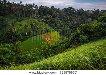 Rice fields in a valley, Ubud, Bali island