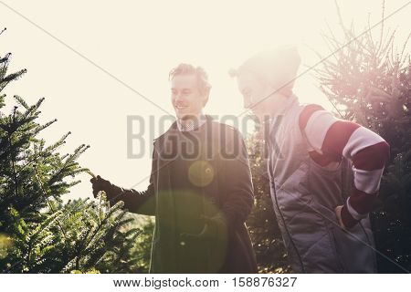 Brothers picking a Christmas tree at a tree farm