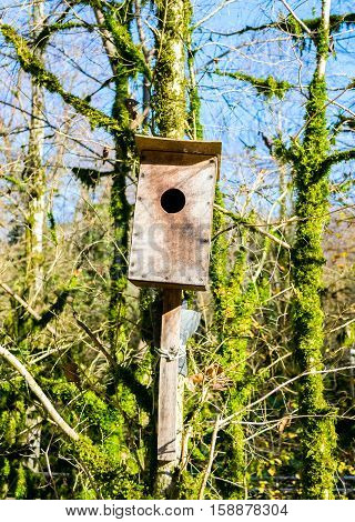 Nesting box on a tree in a bautiful day