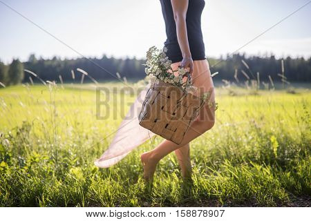 Woman walking on a field collecting herbs to the basket.