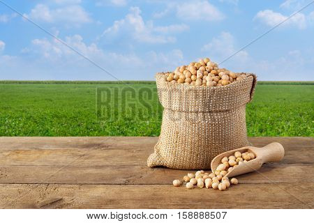 chickpea in sack. Chickpea in bag on table on chickpea field background. Agriculture and harvest concept. Photo with copy space area for a text