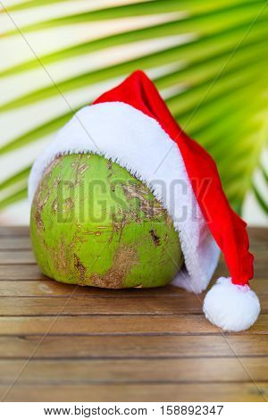 Tropical picture of coconut in a Christmas red hat and palm leaves outdoors