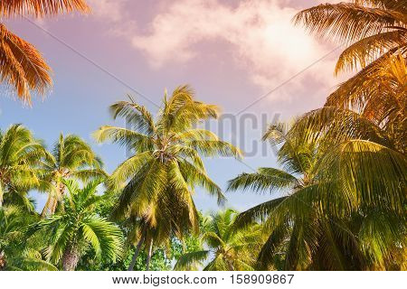 Coconut Palm Trees And Bright Sky