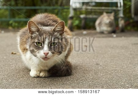 Homeless cats sitting on the street pavement