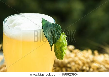 Green hop cone on a glass of light unfiltered beer closeup background