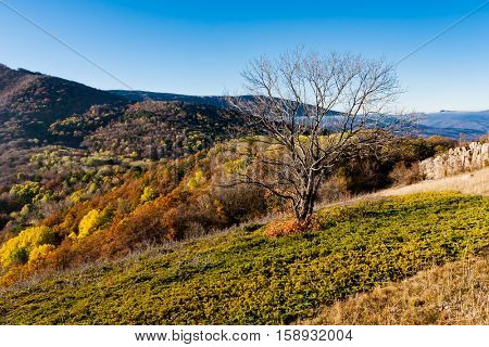alone tree on mountain meadow in nice autumn day