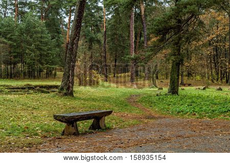 The Bench Through The Woods