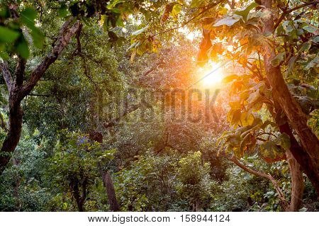 Rays of sunlight falling in between trees in a forest at dawn. Shows the beauty of the outdoors