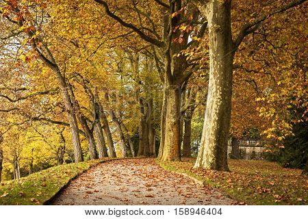 Platan and  chestnut alley in autumn park, Germany
