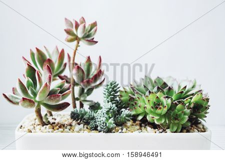colorful small succulent plants in white pot