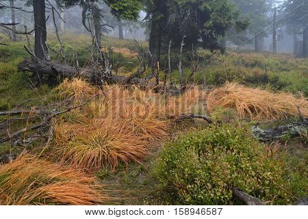 autumnal forest, wet trees, shrubs, long grass, the color orange.
