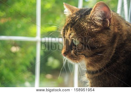 Beautiful adult striped tabby domestic cat sit by the window with view of green trees on the street under sunlight. Shallow dof. Focus on cat's eye.