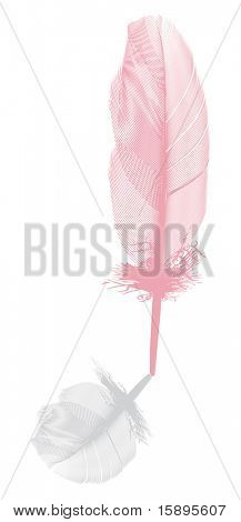illustration with pink feather and grey shadow