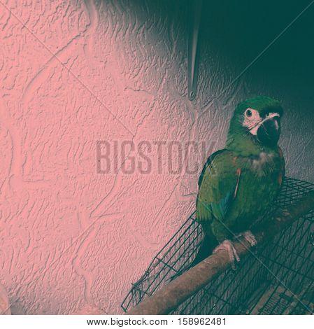 Lo que puede transmitir una mirada de pájaro