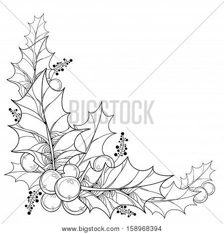 Vector twig with outline leaves and berries of Ilex or Christmas Holly isolated. Traditional Christmas and New Year symbol in contour style for winter design and coloring book. Corner composition.