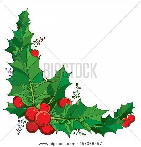 Vector twig with outline green leaves and red berries of Ilex or European Holly isolated on white background. Traditional Christmas symbol in contour style for winter design. Corner composition.
