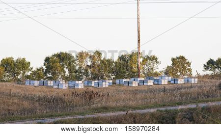 A group of bee hives in North Dakota