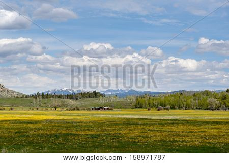Green meadow with yellow flowers and trees in the background. Blue sky with clouds.