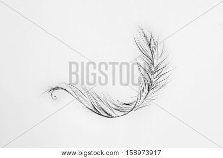 Sketch of a light feather white background.