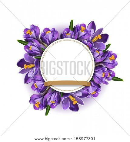 element for design. Blue crocuses with white card round and golden ribbon