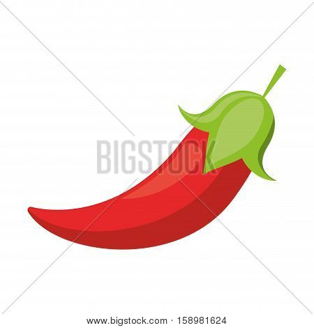 red chili pepper culinary food vector illustration eps 10