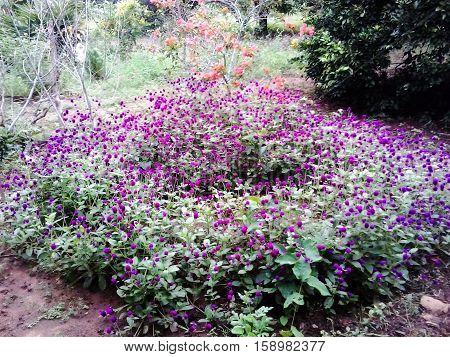 Muchas flores morada juntas con lindo colorido