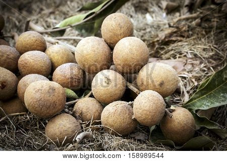 Fresh longan with nature background in a garden.