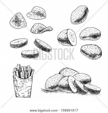Hand drawn set of potato. Retro sketches isolated. Vintage collection. Linear graphic design. Sketch chips and french fries. Black and white image of vegetables. Vector illustration.