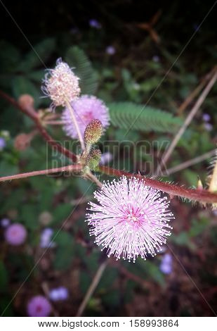 Grass flower in the morning time look breezy.
