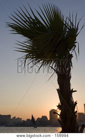 Nile Sunset