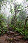 Hiking trail in lush rainforest La Fortuna Costa Rica poster