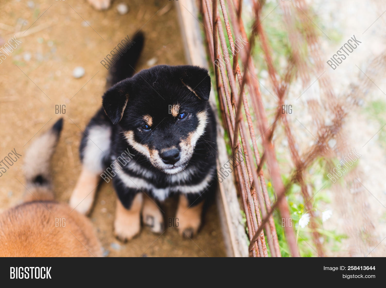 Portrait Cute Black Image Photo Free Trial Bigstock