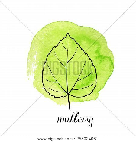 Vector Leaf Of Mulberry Tree At Green Watrcolor Paint Stains, Hand Drawn Illustration