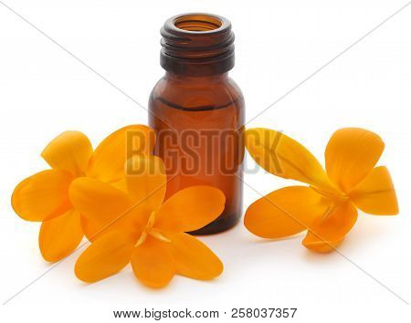 Yellow Crocus or Saffron with essential oil over white background poster