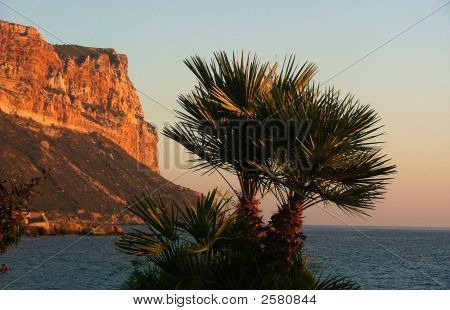 Palm Trees And Mountain