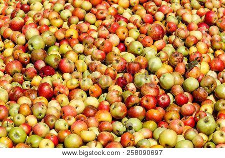 Apples Background - Rich Apple Harvest For Cider Or Apple Juice.